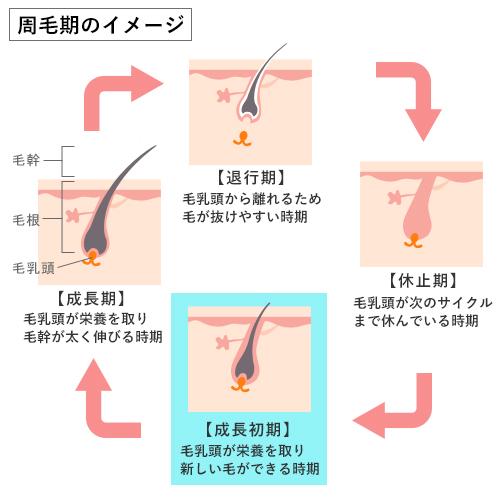 周毛期のイメージ