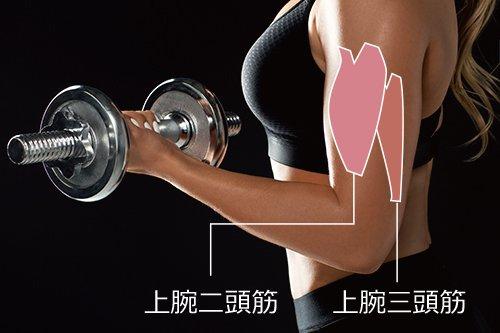 二の腕痩せ:二の腕が太くなるのはなぜ?1