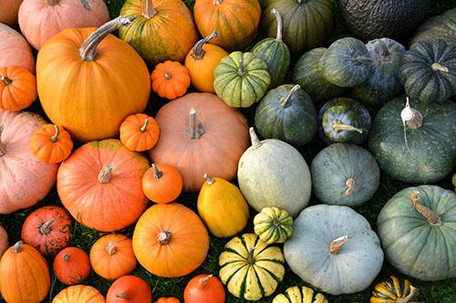 ハロウィンの食材といえばコレ!かぼちゃの栄養素は?